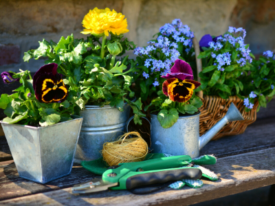 gardening pots and plants